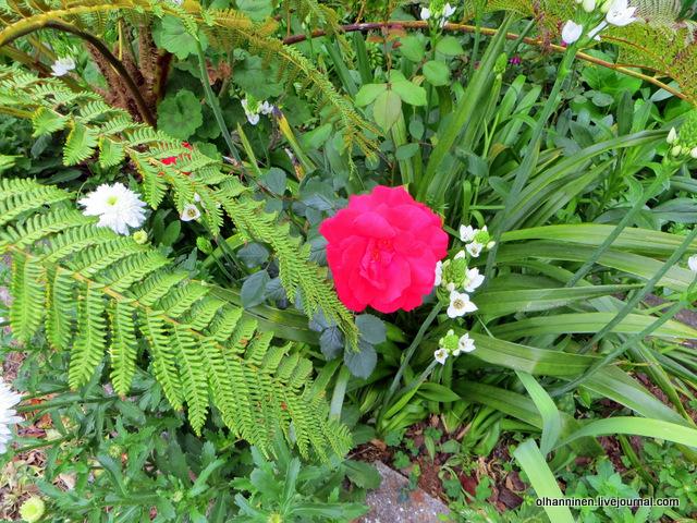 16 роза на пороге покинутого дома