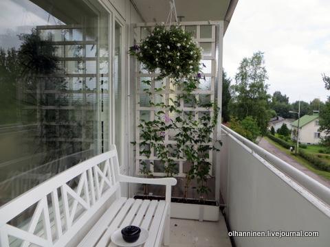 клематисы для балкона фото