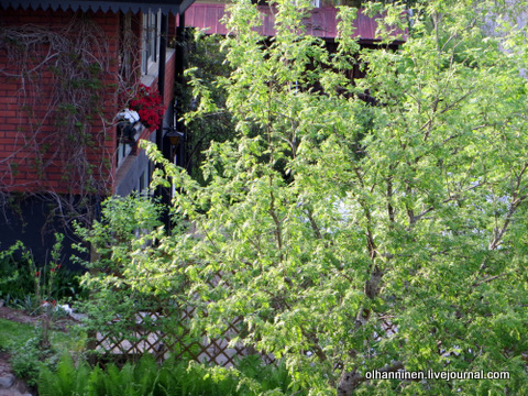09 у соседей ожило что-то вьющееся