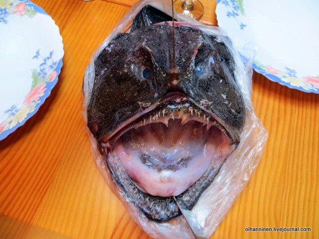 01 усик рыбы-черта и зубы