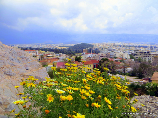 01 Афины Акрополь  желтые ромашки над городом