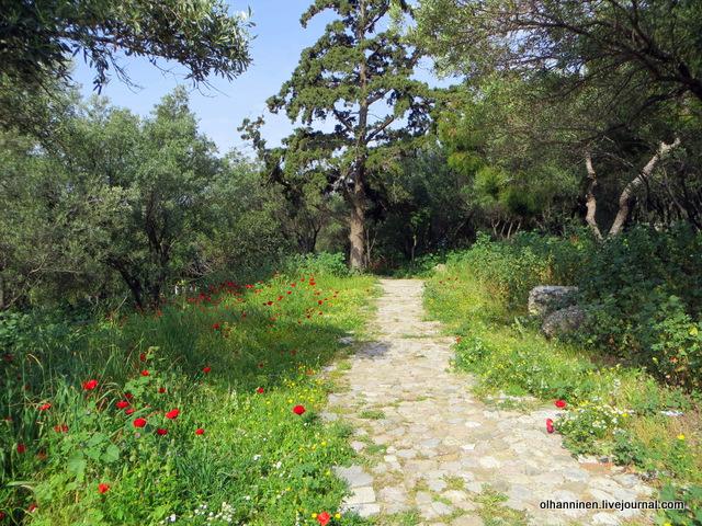 08 Афины Акрополь маки вдоль дороги
