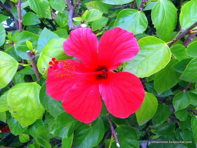 15 Афины цветы у музея Бенаки вблизи