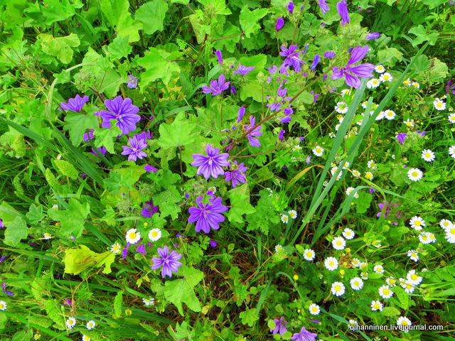 23 фиолетовые цветы везде