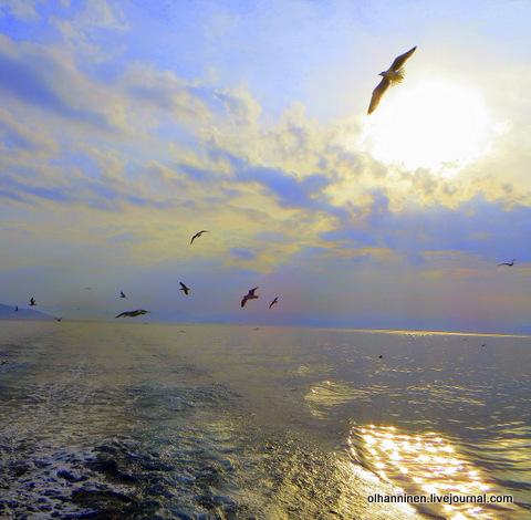 чайки над Эгейским морем