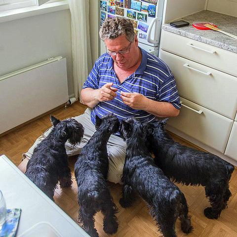 04 муж учит собак жизни