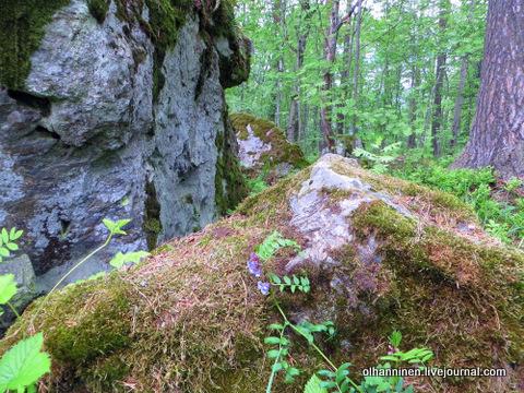 06 камни в лесу