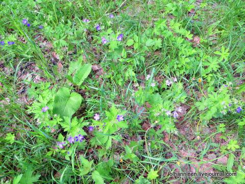 13 лесные цветочки