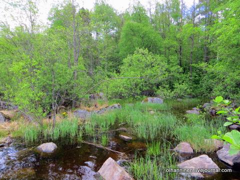 17 речки болотистые