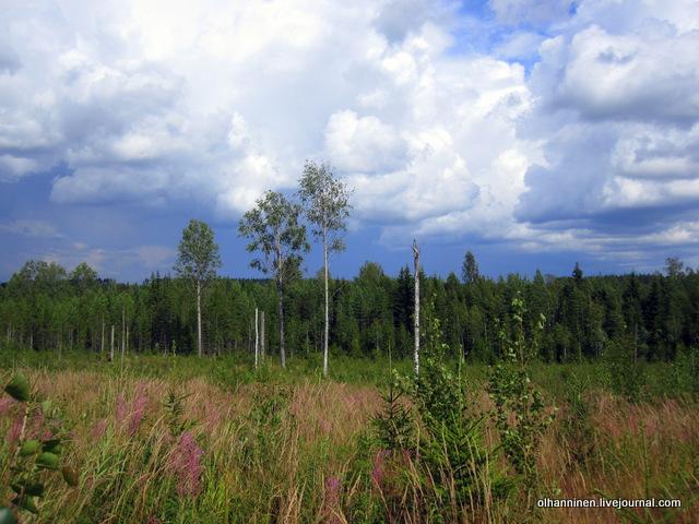 16 поля и леса