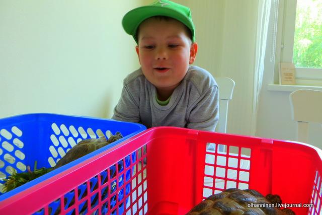 08 внук Онни забавляет попытка алу перелезть в другую коробку