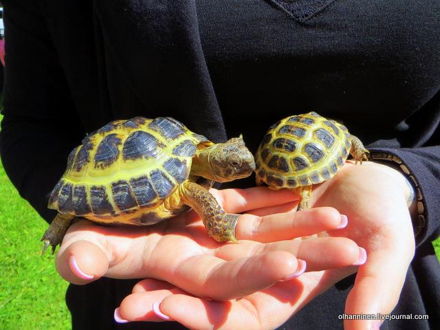 12 черепашка подросток и малыш в ладонях