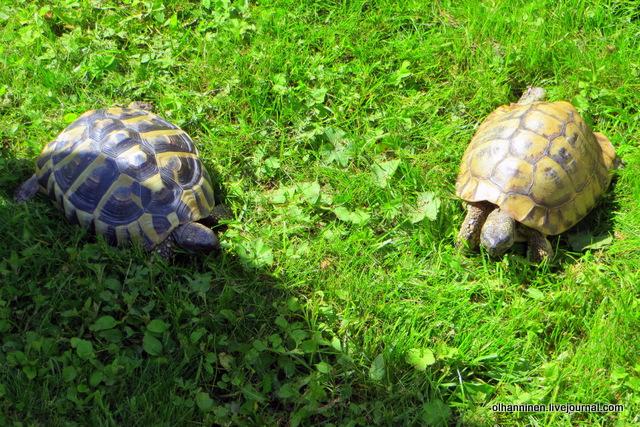 13 какие разные большие черепахи
