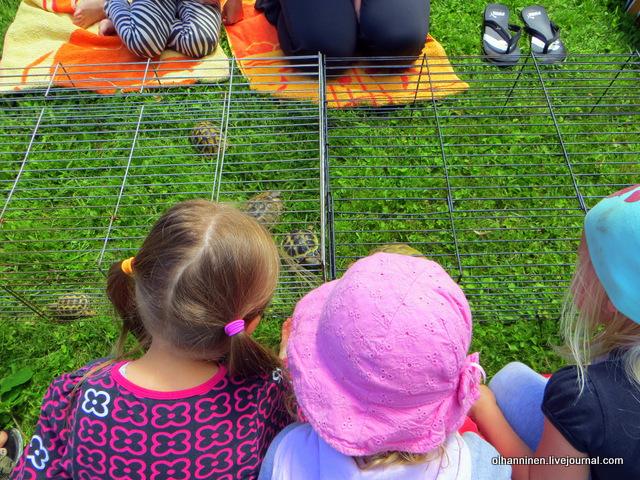 18 дети наблюдают  маленьких черепашек
