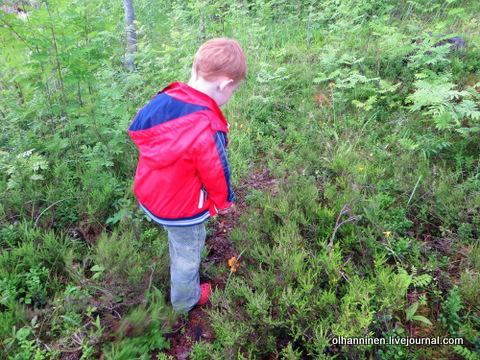 02 сынишка нашел лисички