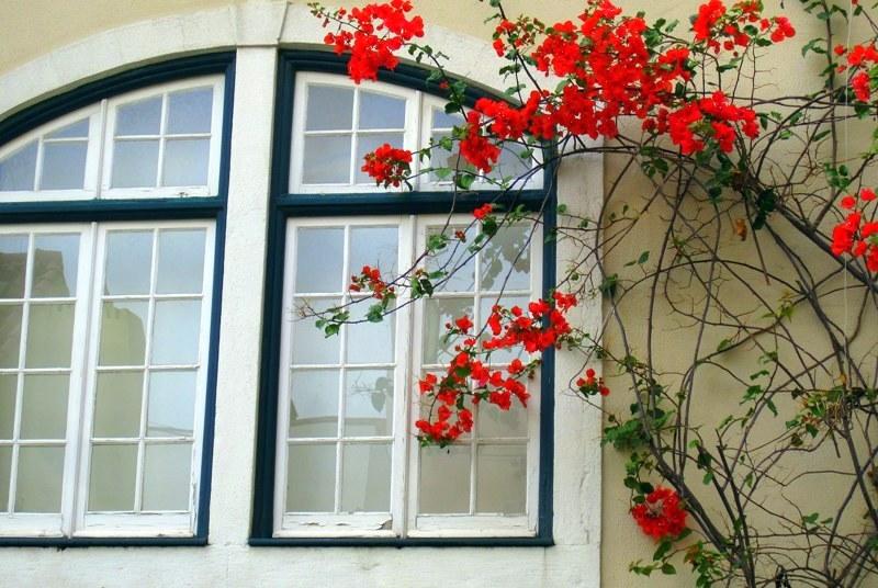Одна из фотографий португальских цветов все же оказалось ничего
