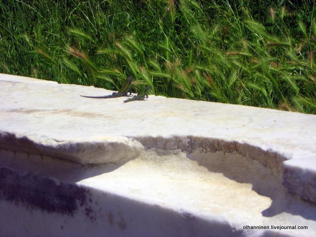 24 две ящерки на краю мраморного бассейна