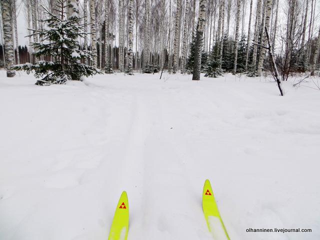 01 прокладываю лыжню в березовом лесу