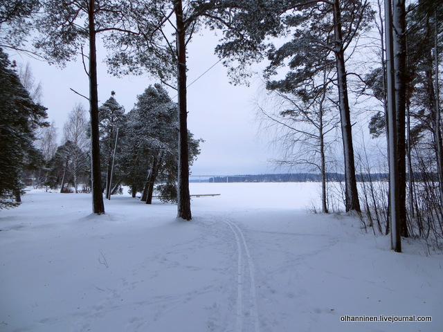 11 из леса на озеро с мостом