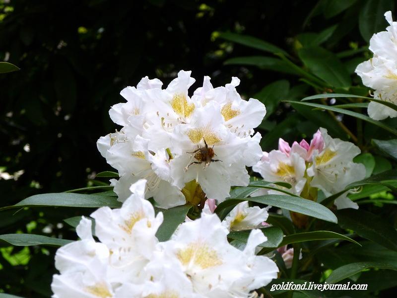 flower_12