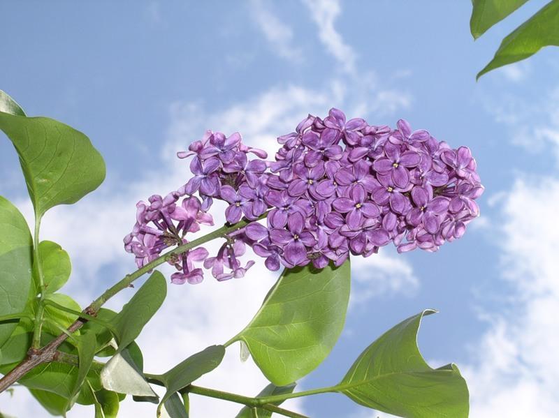 flower_13