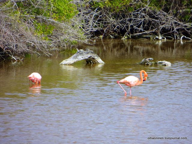 фламинго, группа