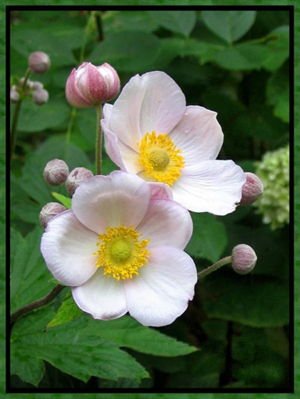 flower_46