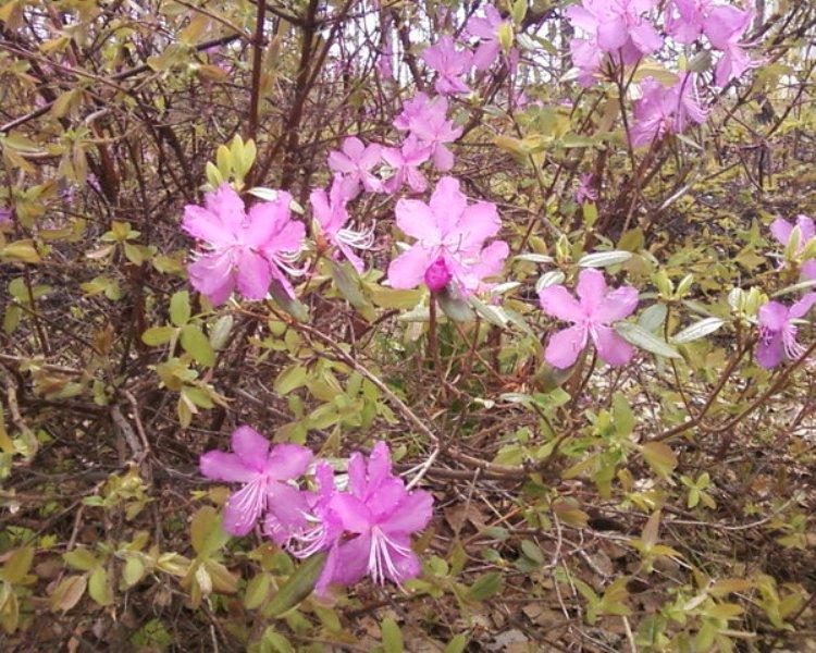 flower_54