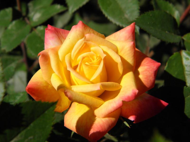 flower_57