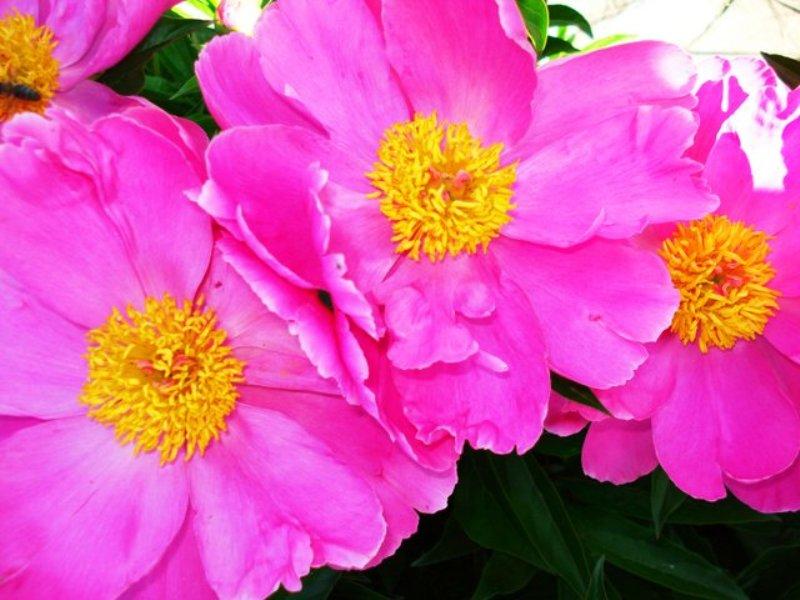 flower_59