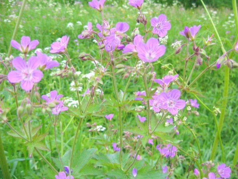 flower_68