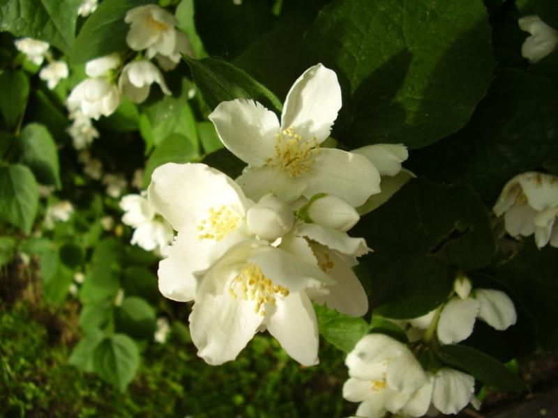 flower_69