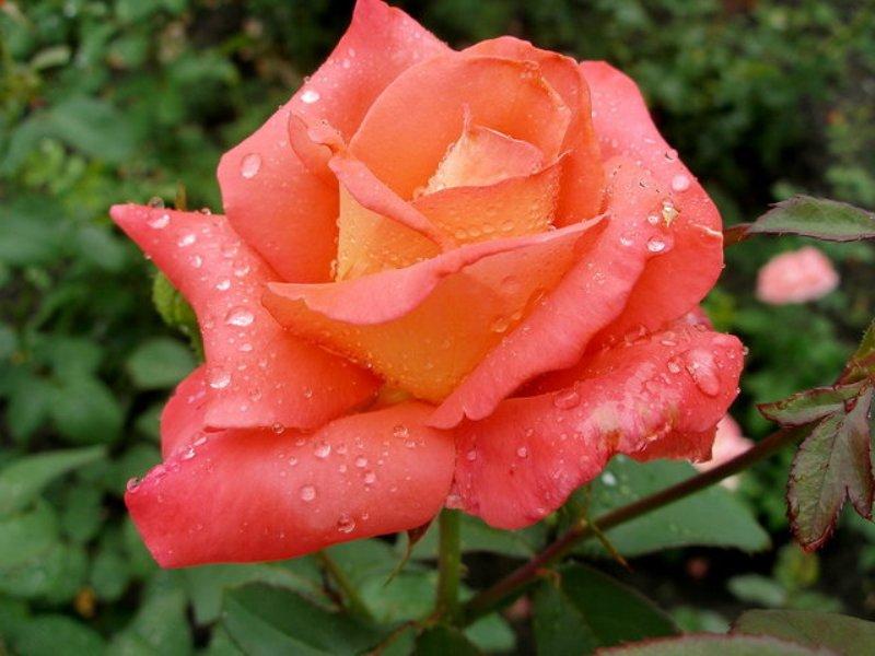 flower_75