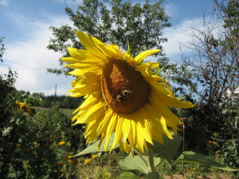 flower_76