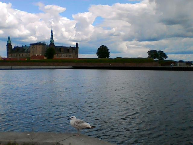 Чайка на фоне Кронборг, Хельсингер