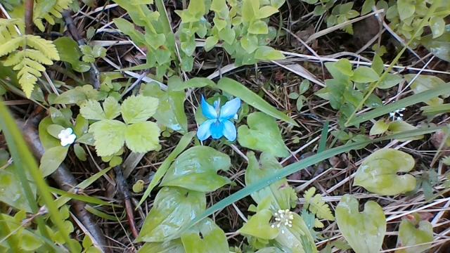 Еще цветут фиалки