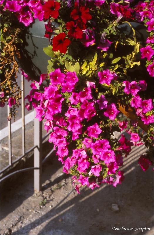 flower_81