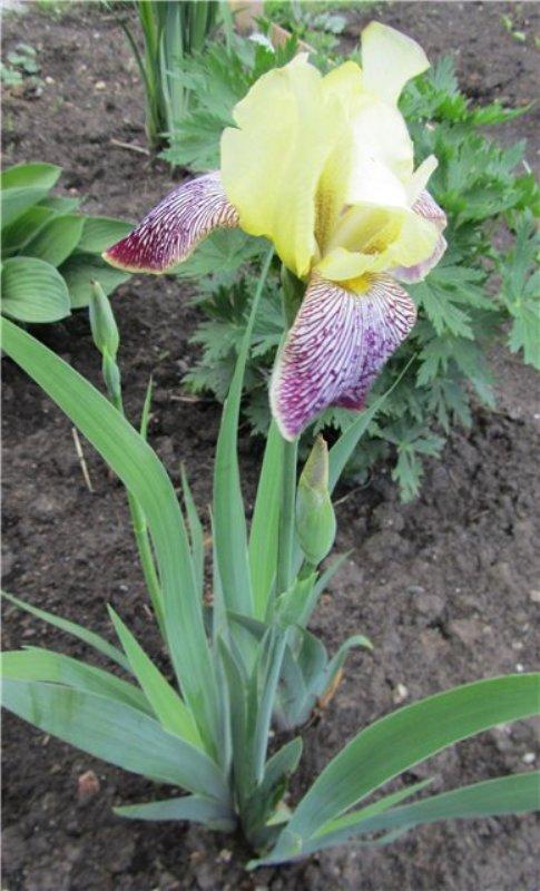 flower_89