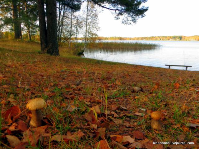 грибы осень