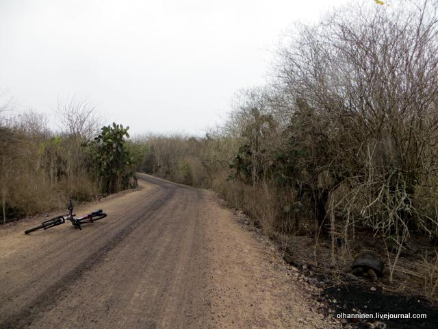 в дикой природе черепахи безнадзорно ползают в лесу.JPG