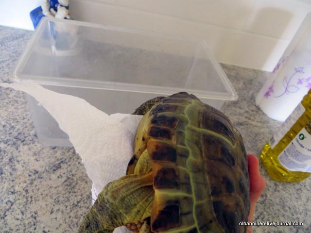 03 черепаху вытираем.JPG