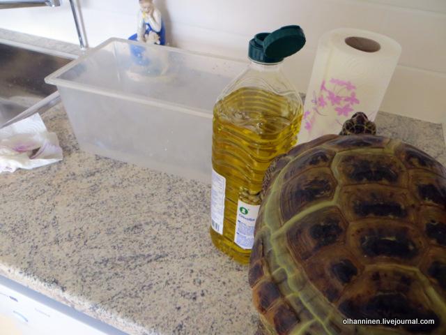 04 черепаху смазываем растительным маслом.JPG