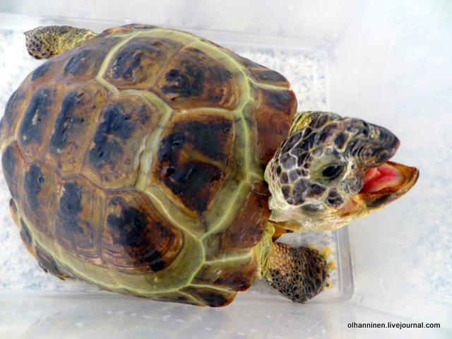 06 черепаха может укусить.JPG