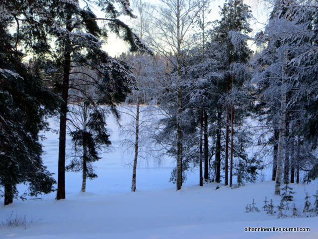 02 лес и озеро.JPG