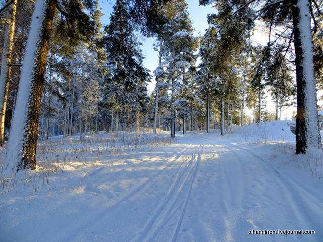 04 лесные деревья в снегу.JPG