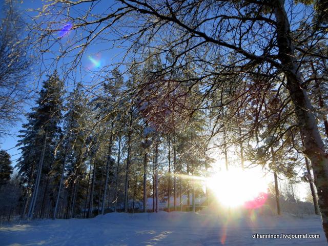 05 зимнее солнце в лесу.JPG