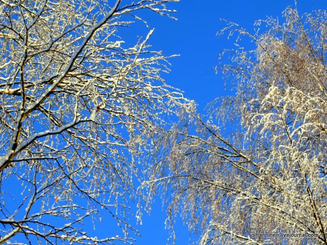 09 ветки в снегу.JPG