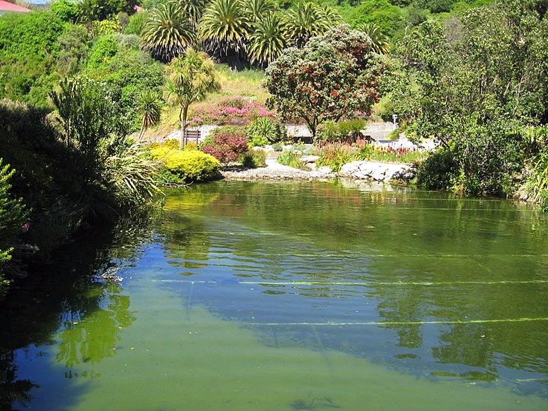 В безлюдном ботаническом саду есть пруд