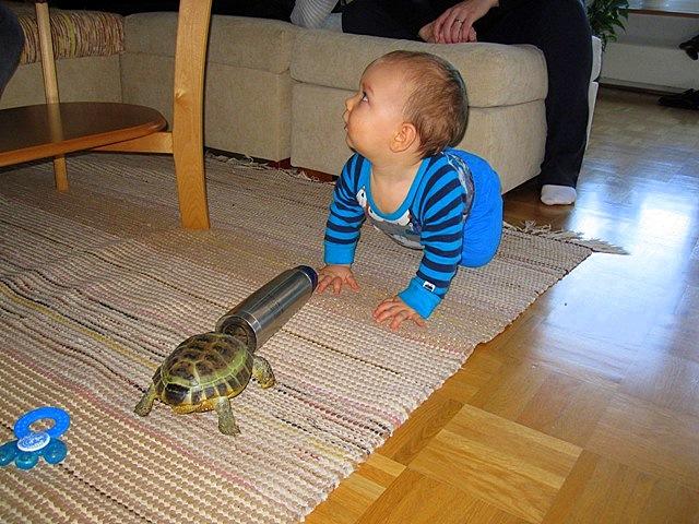 Черепаха, термос и внук
