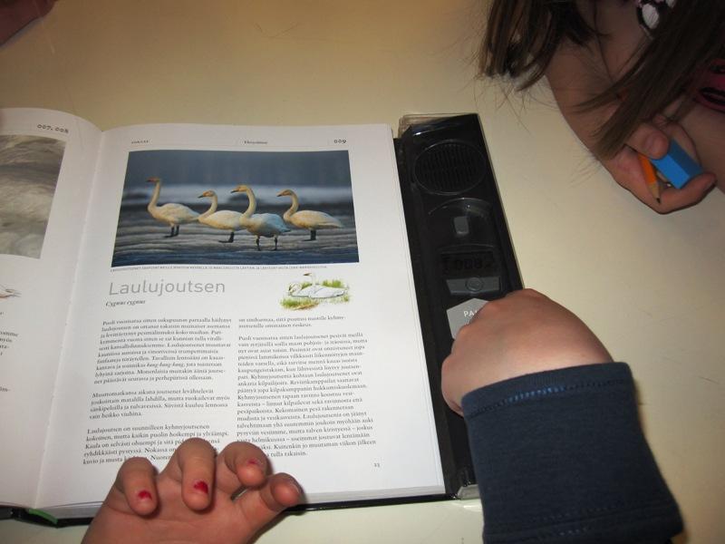 Ребята изучают материал о лебедях и их криках